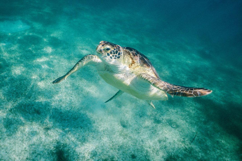Cancun Mexic - Destinatii turistice exotice