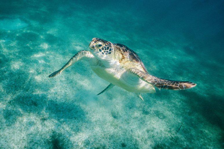 Cancun Mexic – Calatorii in 500 Cuvinte