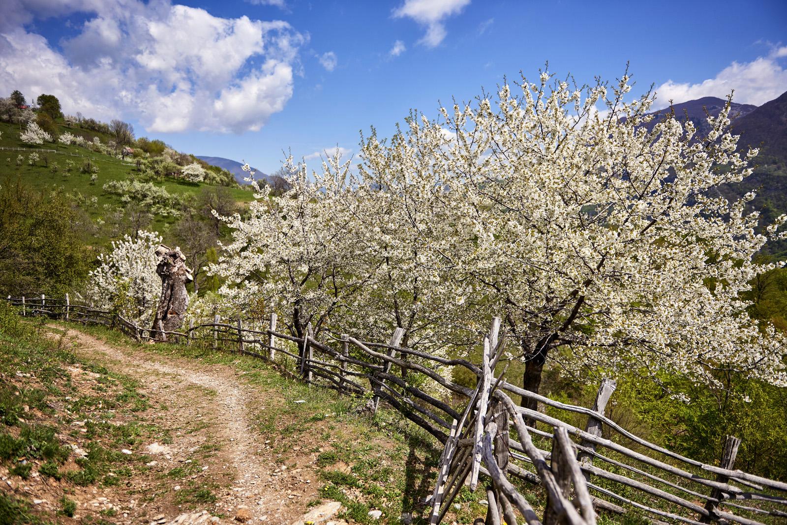 Traseu spre satele Inelet si Scarisoara