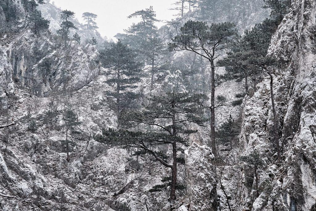 Parcul National Domogled Valea Cernei